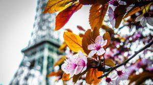 מגדל אייפל באביב