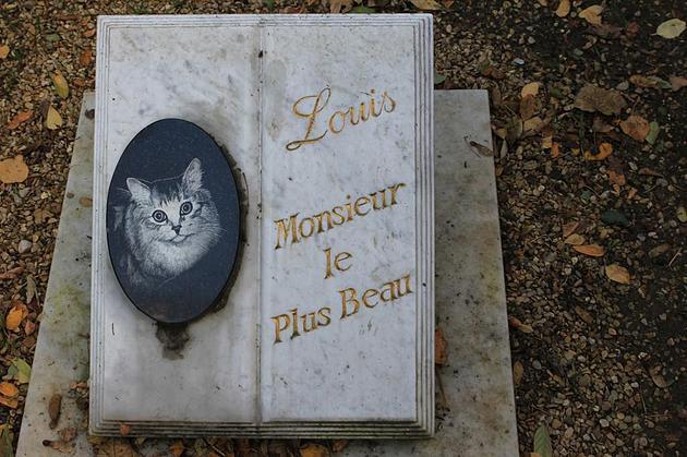 מצבה לזכרו של חתול אהוב