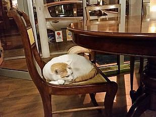 קפה החתולים של פריז – Café des Chats