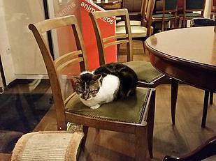 אחד הלקוחות בבית הקפה