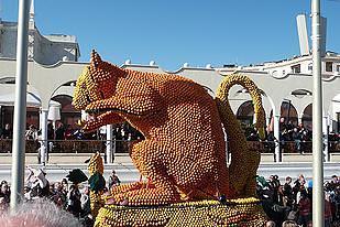 חתול בפסטיבל של ניס - צילמה ד