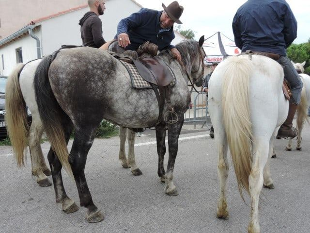 סוסים עולים על המעבורת