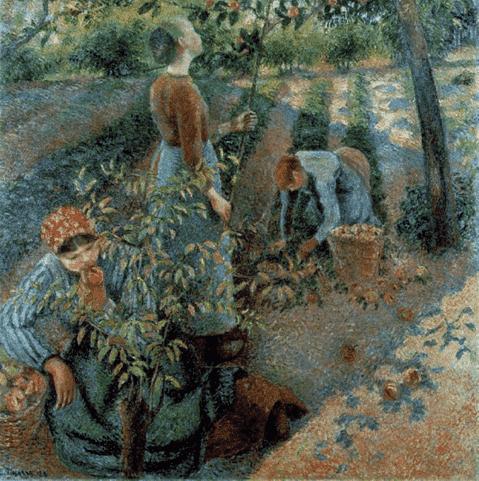 Camille Pissaro, La cueillette des pommes, 1886 קאמי פיסארו, קטיף תפוחים, 1886