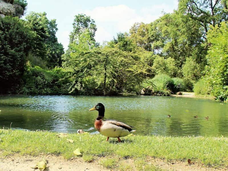 פארק באגאטל ברובע ה-16 בפריס
