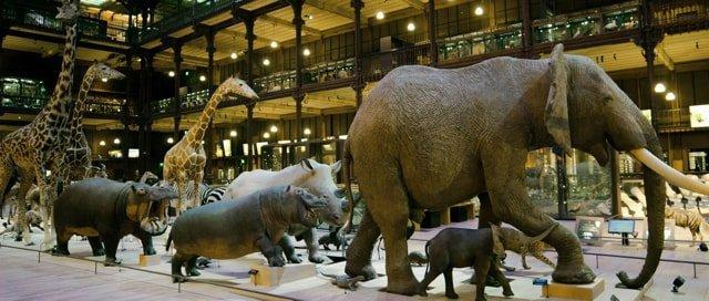 מוזיאון הטבע בגן הבוטאני של פריז