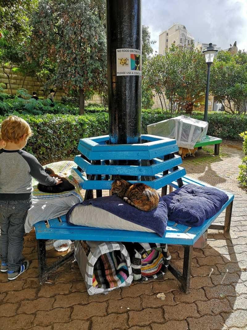 ילד משחק עם חתול בפארק החתולים שנמצא בטיילת בין סלימה לסן ג'וליאן.