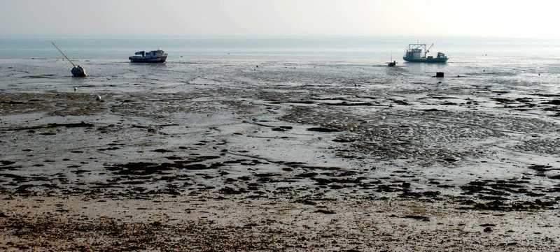 מראה הסירות בשעת השפל
