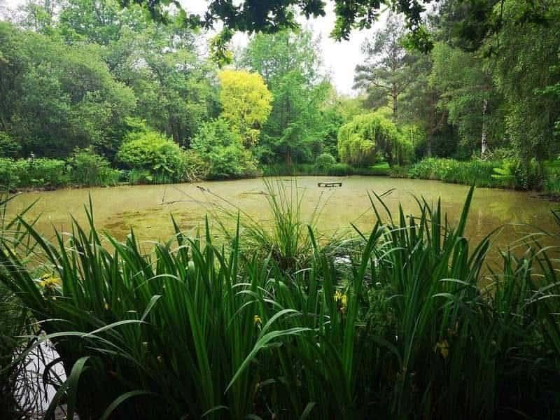 האגם בטירה. צילם: צבי חזנוב.