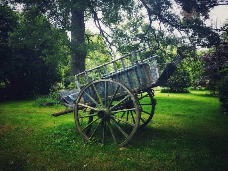 עגלה באמצע הגן. צילם: צבי חזנוב