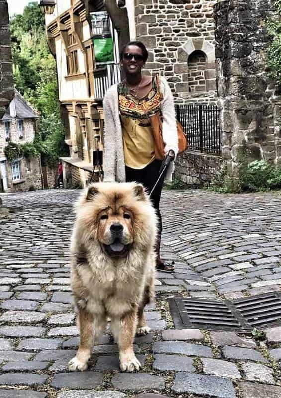 כלב חמוד ברחוב ג'רוזל. צילם: צבי חזנוב.