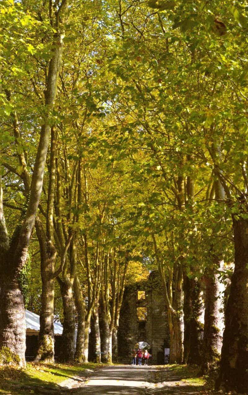שדרת העצים שמובילה לטירה
