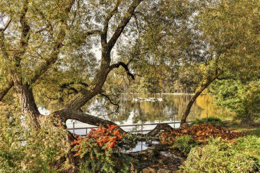 יער בולון - המדריך המלא למטייל מאת יואל תמנליס