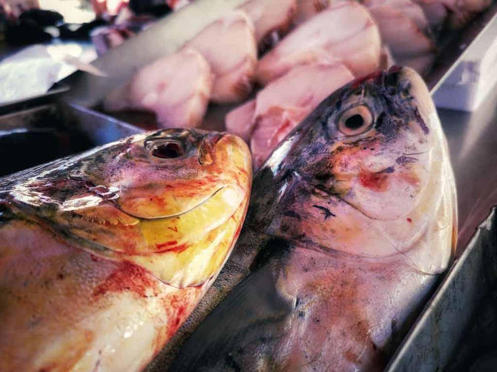שוק הדגים במרסשלוק