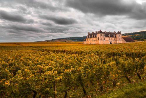 דרך היין של בורגון (Bourgogne) מאת יוסי דרורי