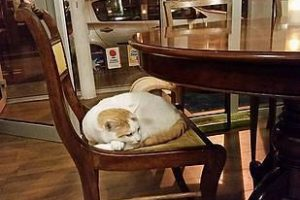 בית קפה החתולים